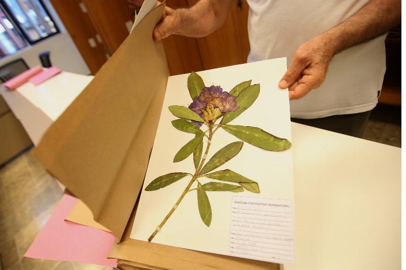 Üsküdar Üniversitesi Herbaryumu açıldı 3
